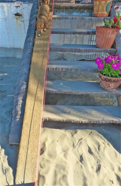 We yet another dog ramp.