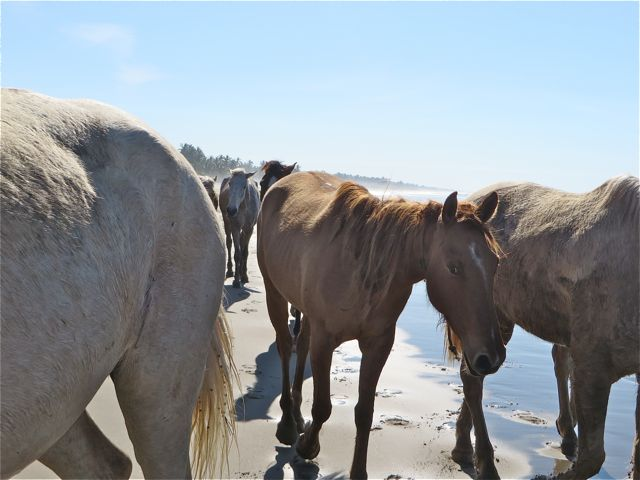 ...and the horses parted around us.