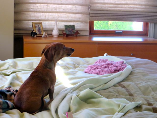 Carmeh loves to look outside but we can no longer allow her to jump to the front window to look out at the street.  It occurred to me the other day to open a bedroom window where while on the bed she can look down the road.