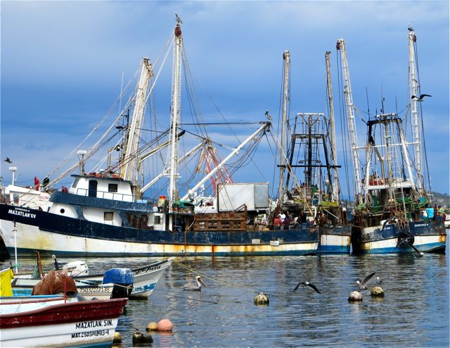 I did manage to take this one photo as we arrived in Mazatlan.  A few shrimp boats were in and unloading their catches into that waiting truck.