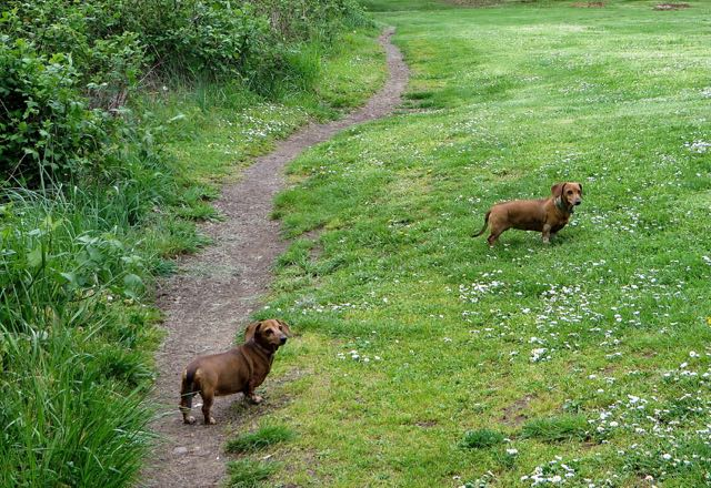 The girls were mostly onleash but we did find an area that they could run free in.