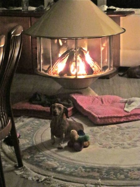 The rest of the time she hung out close to the fire to stay warm.