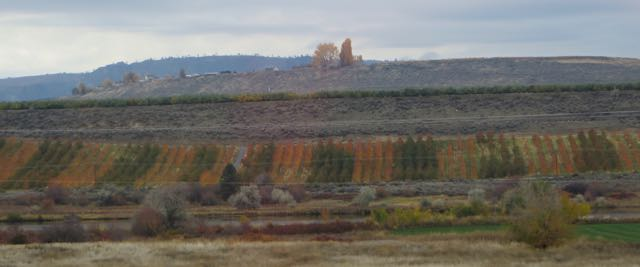 The fall colors in the orchards were stunning. It is so difficult to get good photos while speeding down a highway.