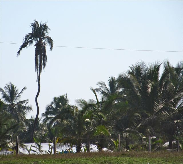We have a crooked palm tree that can only be seen from one particular area on the beach.
